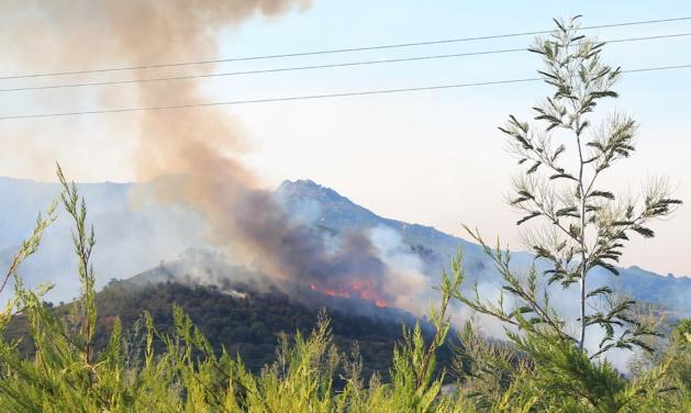 Le feu à Lucciana (Photos Thomas Cerbera)