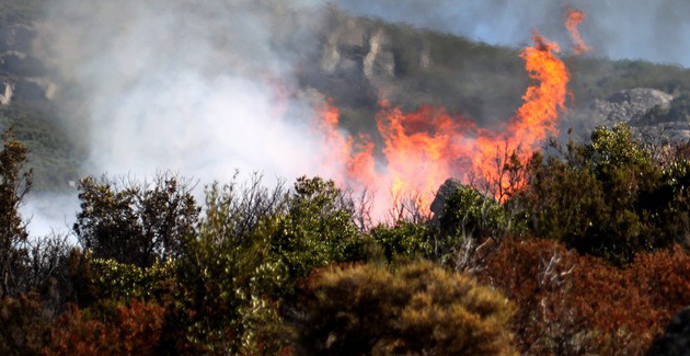 Alerte au feu dans la forêt territoriale d'Albertacce
