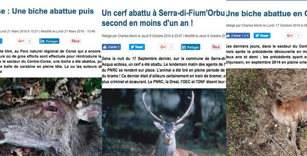 La biche abattue dans le Centre-Corse : Déjà le quatrième acte…
