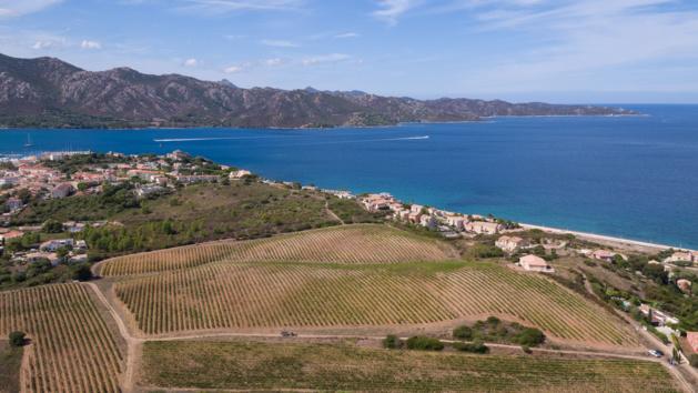Patrimoniu : Le bio fait son chemin dans les vignes du Domaine Orenga