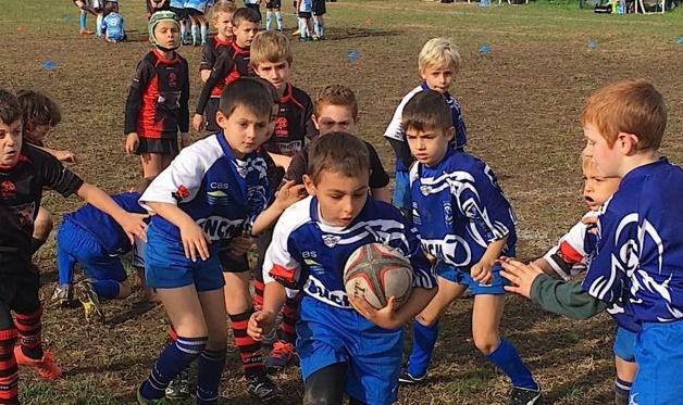 Rugby : Le blé qui lève…