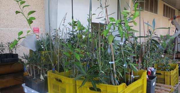 Des plants de végétaux italiens.