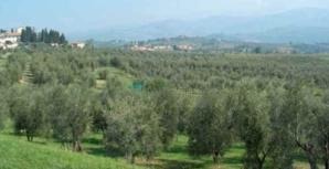 """Xylella : Pour les offices Agricole et de l'Environnement de la Corse """"le double jeu de l'Etat doit cesser"""""""