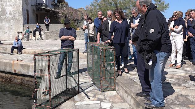 Purticciolu : Des nurseries côtières dans le Cap Corse