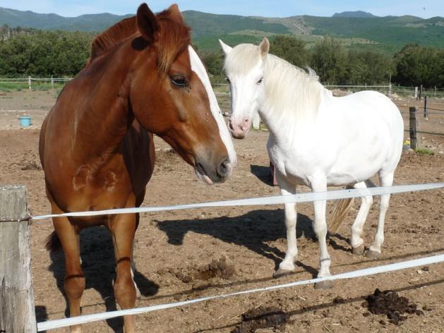 Corte prépare la 26ème édition de Cavall'in Festa