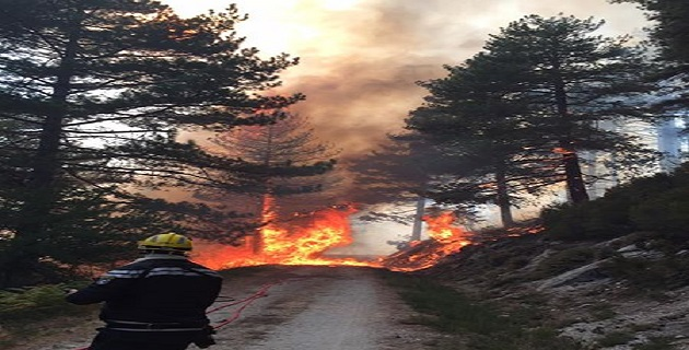 Feu Palneca/ Pompiers Cozzano