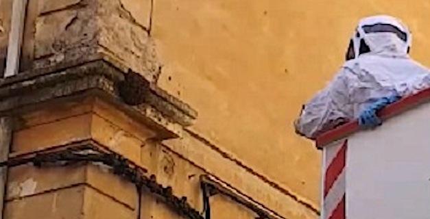 Ajaccio : Capture d'un essaim d'abeilles en centre-ville