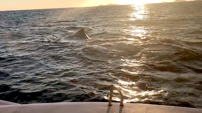 Golfe d'Ajaccio : Rencontre avec une baleine…