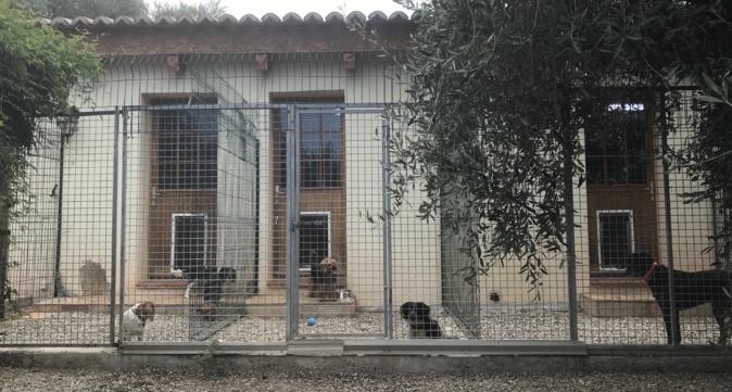 Les pensions pour animaux : Une aide souvent méconnue en Corse