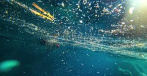Mer Méditerranée. Photo Jean-Baptiste Andreani - Mission CorSeaCare.