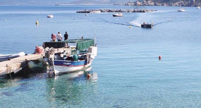 Adrian : La ferme marine des Sanguinaires n'a pas été épargnée