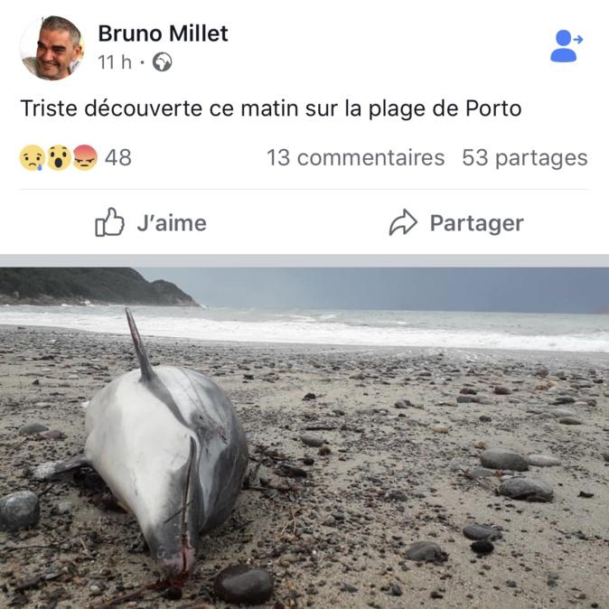 Porto : Un dauphin retrouvé mort sur la plage