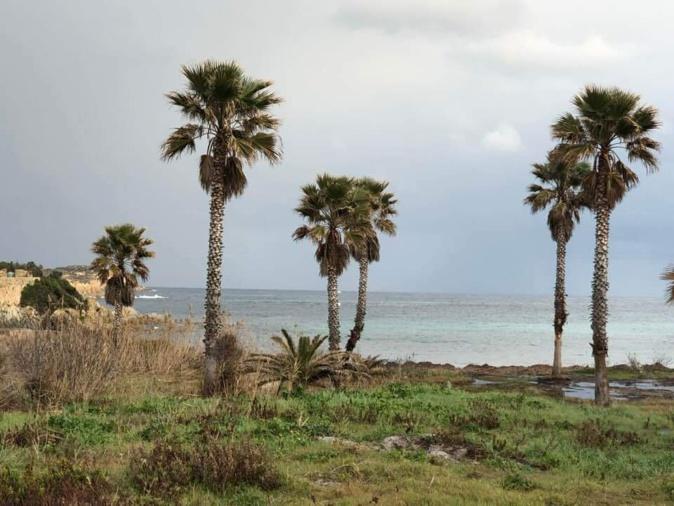 Les quatorze palmiers du site de
