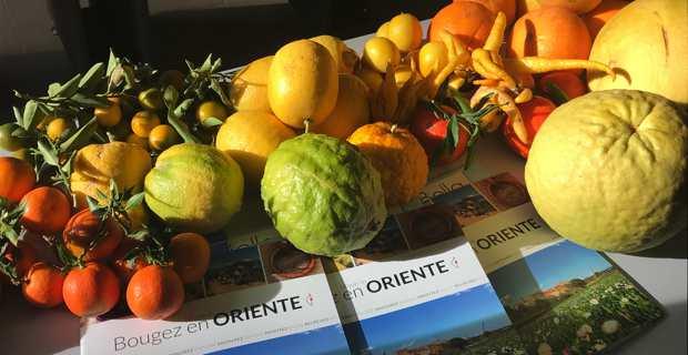 Mare di Agrumi : Des circuits touristiques autour des agrumes en Plaine orientale