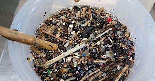 Pollution plastique entre Corse et Toscane : L'ennemi invisible qui étouffe la Méditerranée