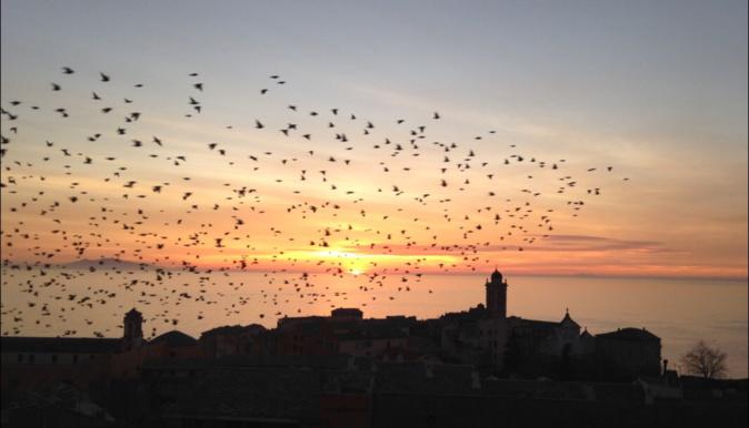 La photo du jour : Vol d'étourneaux au-dessus de Bastia