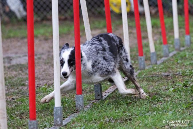 Corse : Le club d'agility canine Athleti'Dogs entre dans le cercle des concours
