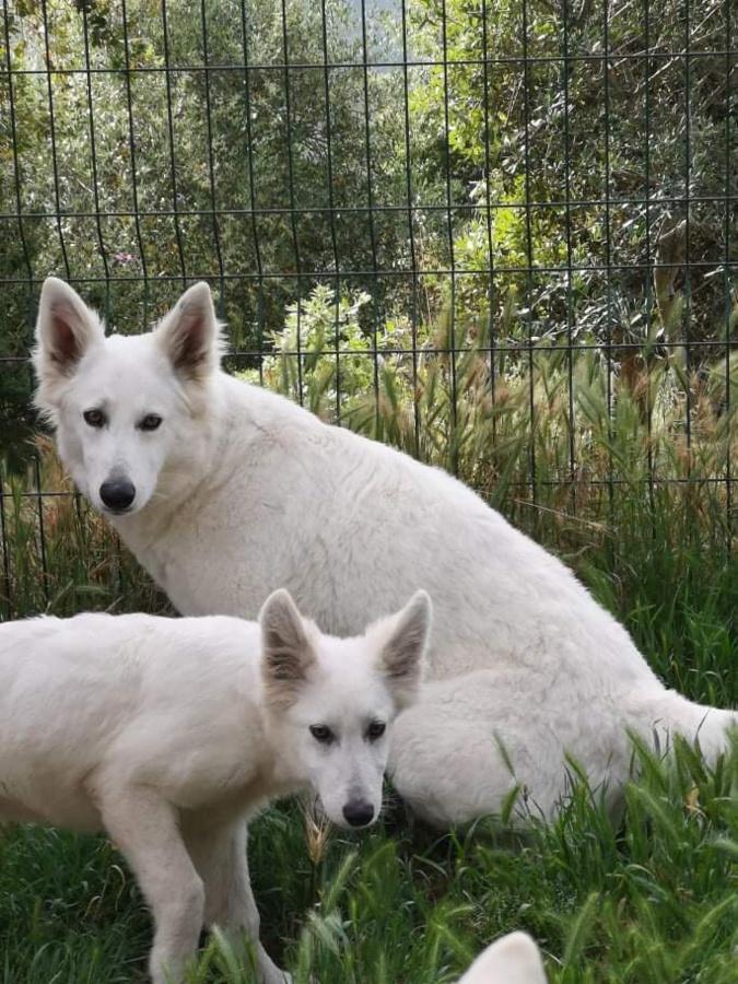 De nouveaux cas de maltraitance animale à Travu