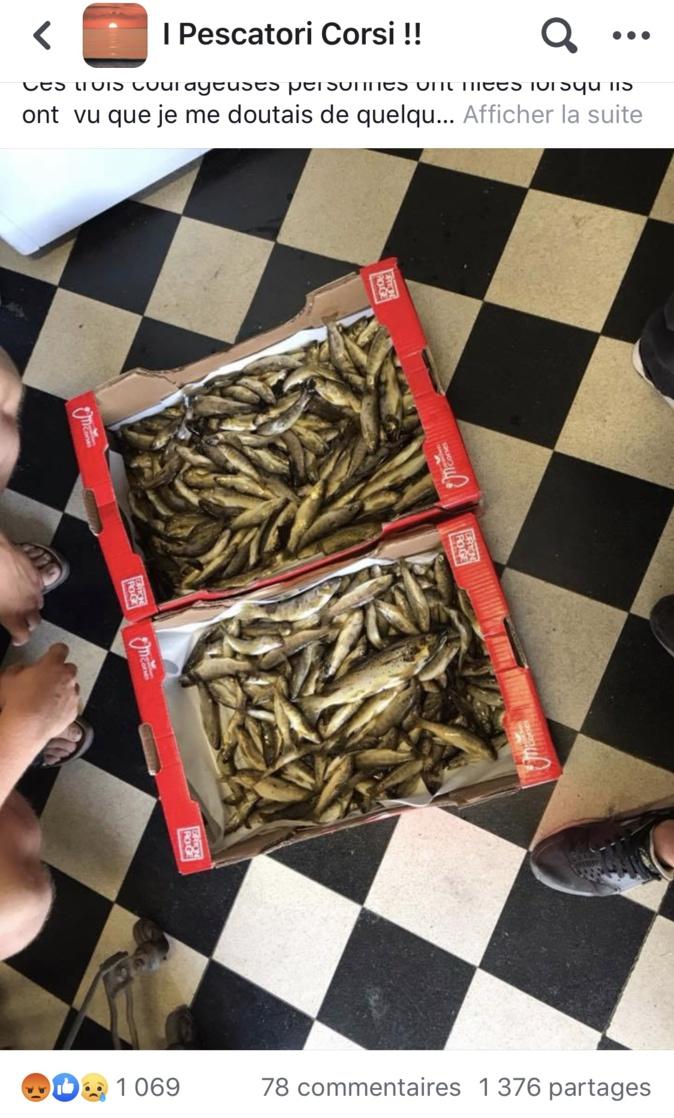 Muratu : 340 truites, de 5 à 15 cm abandonnées par des braconniers mis en fuite