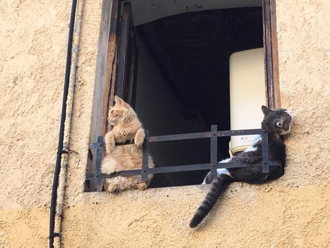 Bronzette pour nos amis les chats