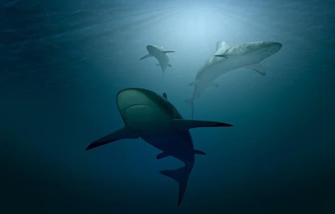 Les requins vont-ils disparaître de la Méditerranée?