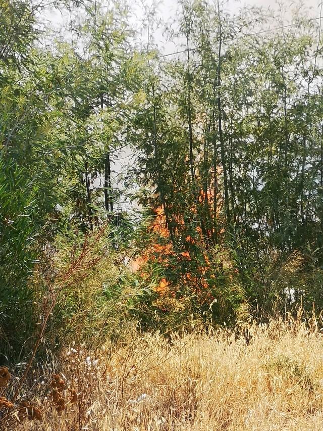 L'incendie  de la route de l'aéroport de Calvi  maîtrisé malgré une double mise à feu