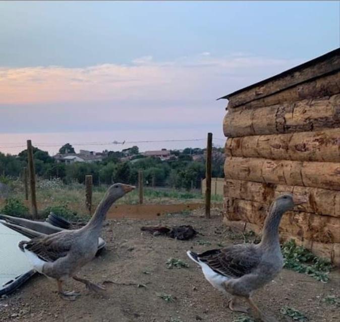 Le parc animalier d'Aregnu rouvrira ses portes ce mercredi 31 juillet