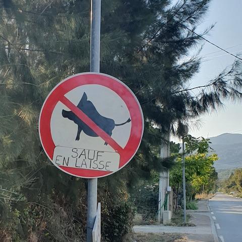 Les insolites de l'été : interdit aux sangliers