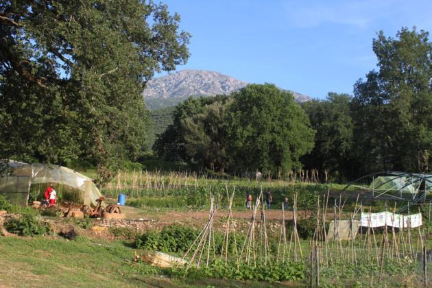 Contrôles PAC : Pour y voir plus clair avec la Chambre de l'Agriculture de Haute-Corse