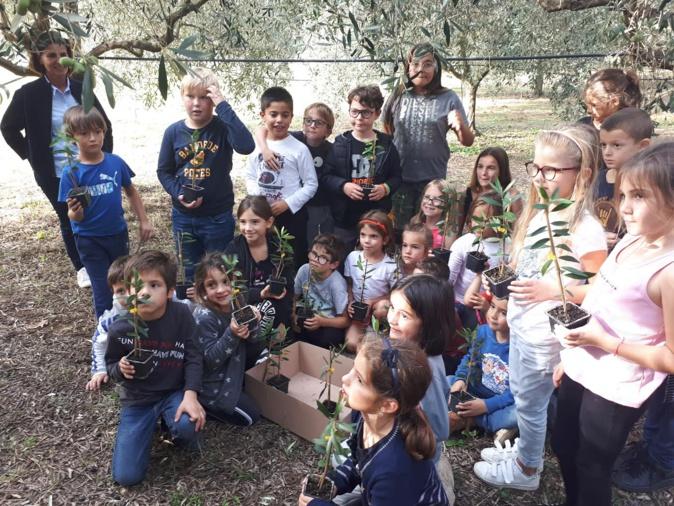 Un an après, les enfants du Nebbiu et de la Conca d'Oru retrouvent leurs oliviers