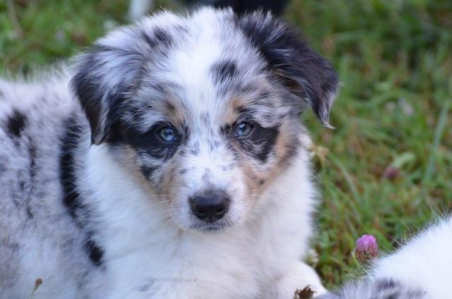 Comment être un bon maître pour son chien ? Une « Puppy Class » en ligne vous explique tout