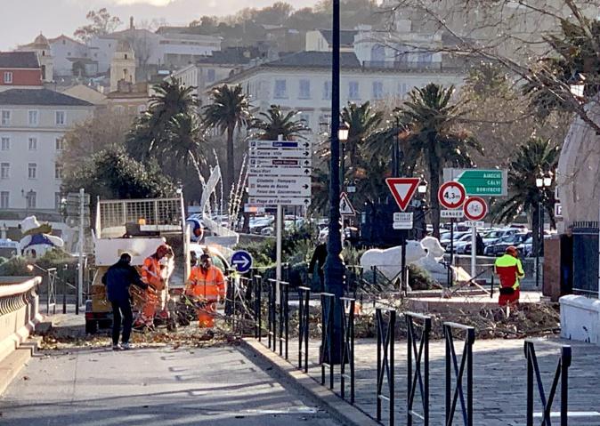 Un arbre arraché devant la chambre de commerce de Bastia