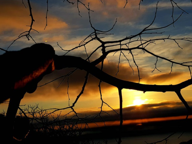 La photo du jour : Lever de soleil dans les buissons de Silgaghja