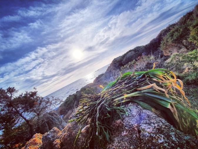 La photo du jour : coucher de Soleil sur Sollacaro