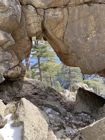 La photo du jour : La forêt de Forca