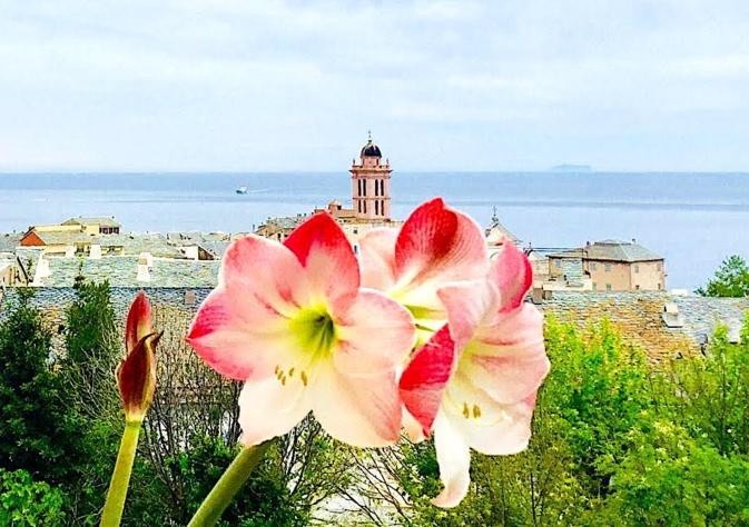 La photo du jour : comme un jardin suspendu au-dessus de Bastia