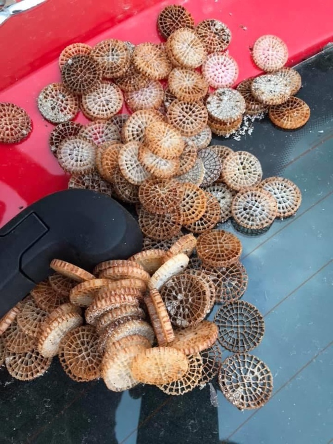 Porto Vecchio : les filtres plastiques, un fléau invisible qui pollue le littoral