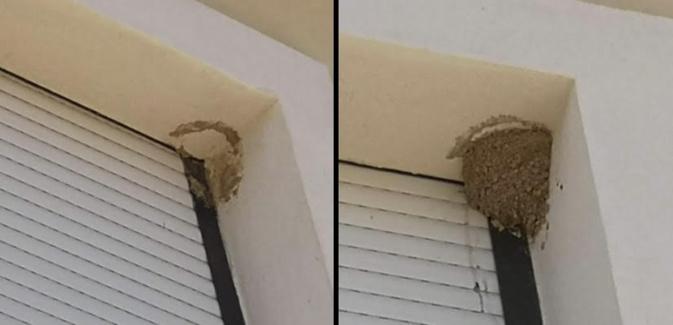 Porto-Vecchio : destruction illégale de nids d'hirondelles