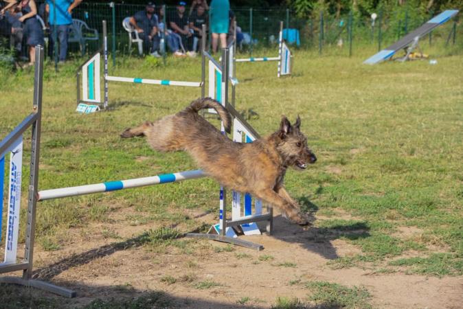 Afa : un jeu concours au club canin athleti'dogs