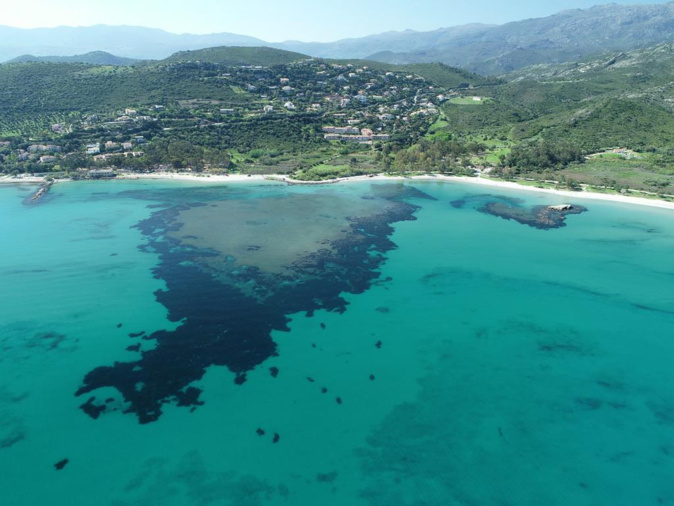 Le parc marin du Cap Corse et de l'Agriate Parc regroupe à lui seul 13 % des herbiers de Posidonies de Méditerranée française (Photos OFB)