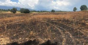 Brûlage dirigé sur le domaine de Pinia.