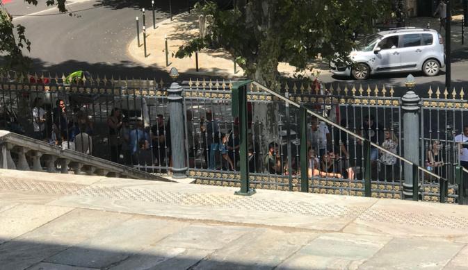 Veau jeté vivant dans le vide : le procès du prévenu devant le TGI de Bastia