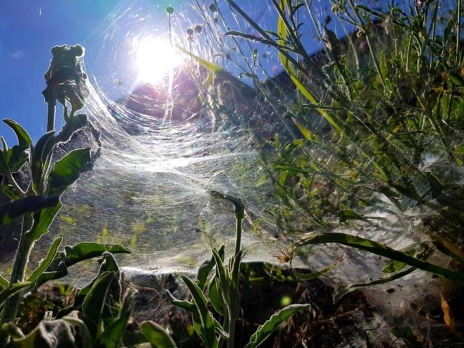La photo du jour : l'Arpone pris dans une toile d'araignée