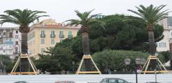 Ajaccio : On prépare le transfert des végétaux du square Campinchi