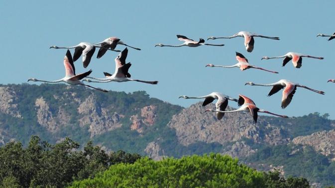 La photo du jour : vol de flamants roses au-dessus de Saint Cyprien