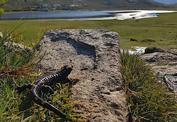 La photo du jour : Catedu muntaninu au soleil du lac de Ninu