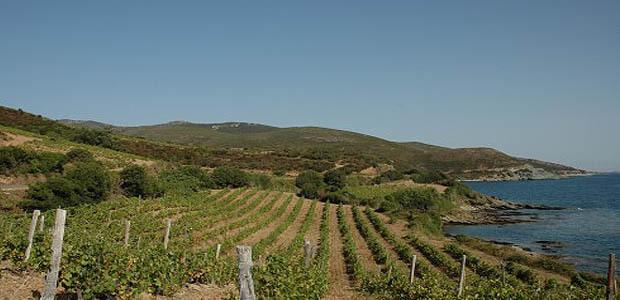 511 000 hectolitres de vin disponibles au début de la campagne 2012-2013
