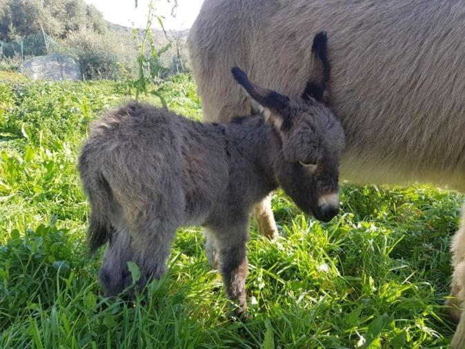 Journée du cheval et de l'âne dimanche 27 septembre à Biguglia