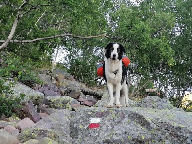 Jack, 4 ans a porté pendant deux jours 2 litres d'eau et 2 de croquettes.