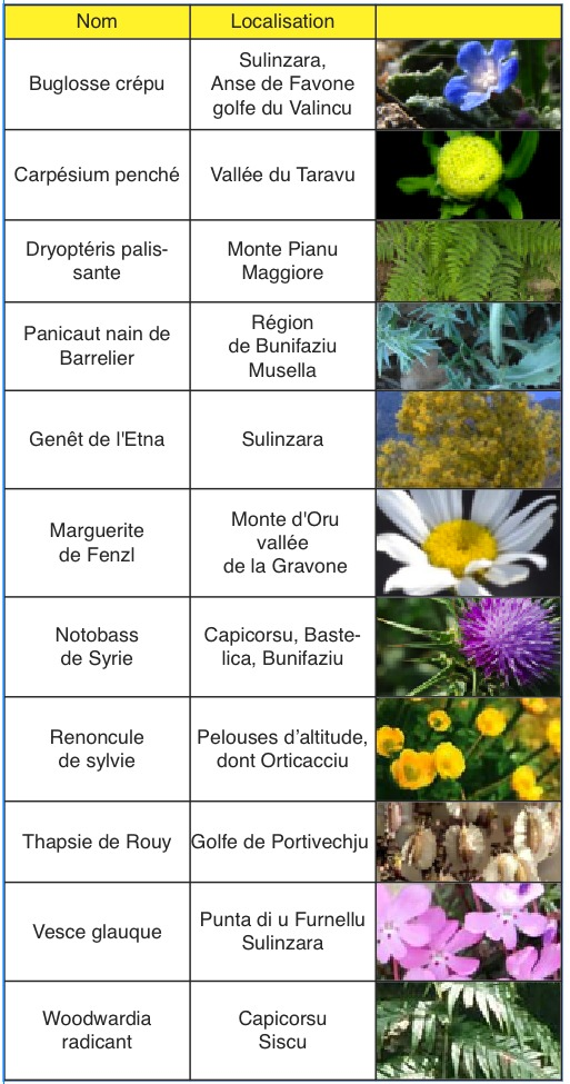 U  Levante : Onze plantes en danger critique de disparition en Corse
